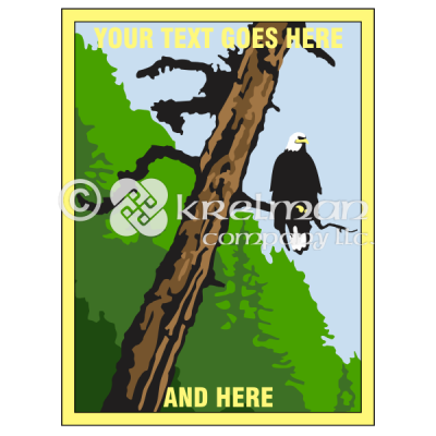 k2101-Bald-Eagle-On-Tree